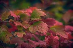 Hösten lämnar bakgrund Arkivbild