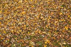 Hösten lämnar bakgrund Arkivfoton