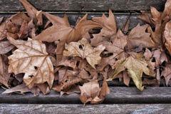 Hösten lämnar bakgrund Arkivfoto