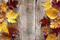 Hösten lämnar för att gränsa royaltyfri fotografi