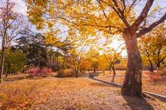 Hösten lämnar i parkera Royaltyfri Fotografi