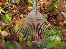 Hösten lämnar i trädgården Royaltyfri Fotografi