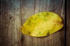 Hösten lämnar Kulört valnötblad på den gamla trätabellen Arkivfoto
