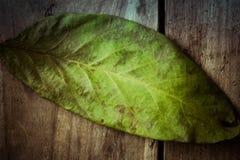 Hösten lämnar Kulört valnötblad på den gamla trätabellen Arkivbilder