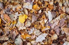Hösten lämnar Natur Abstrakt begrepp Fotografering för Bildbyråer