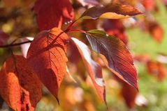 Hösten lämnar Naturlig säsongsbetonad kulör bakgrund Färgrik lövverk i parkera Arkivbilder