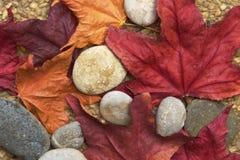 Hösten lämnar och Pebbles royaltyfria bilder