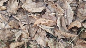 Hösten lämnar på det slipat Royaltyfria Bilder