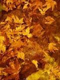 Hösten låter vara bakgrund Royaltyfria Foton
