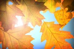 Hösten låter vara bakgrund Arkivfoto