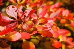 Hösten låter vara bakgrund Royaltyfria Bilder