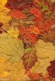 Hösten låter vara bakgrundsleafs royaltyfri foto