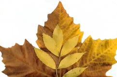 Hösten låter vara bakgrundsleafs arkivbild
