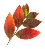 hösten låter vara den surface överkanten Royaltyfri Fotografi