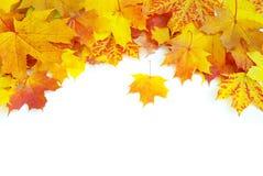 hösten låter vara lönn Royaltyfri Foto