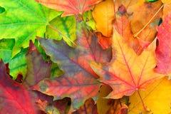 hösten låter vara mångfärgat Arkivbild