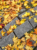 hösten låter vara momentstenen Fotografering för Bildbyråer
