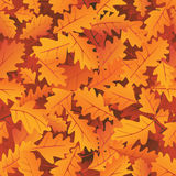 hösten låter vara oaken Arkivfoto