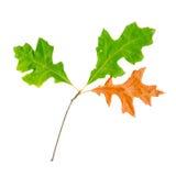 hösten låter vara oaken den röda surface överkanten Royaltyfri Fotografi