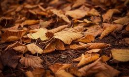 hösten låter vara parken Royaltyfria Bilder