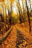 hösten låter vara parken Arkivbilder