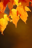 hösten låter vara red royaltyfri foto