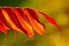 hösten låter vara red arkivfoton