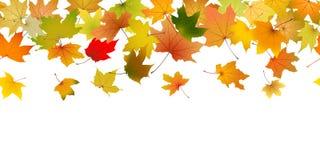 hösten låter vara seamless vektor illustrationer
