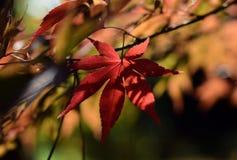 hösten låter vara solljus Royaltyfria Foton