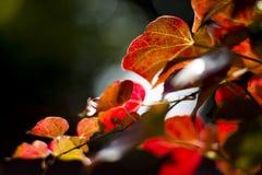 hösten låter vara solljus Arkivfoto