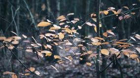 hösten låter vara treen lager videofilmer