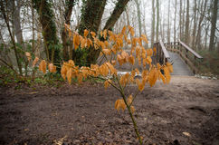 hösten låter vara treen royaltyfri fotografi