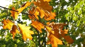 hösten låter vara treen Till och med sidorna solskenen lager videofilmer
