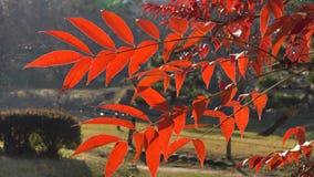 hösten låter vara trees arkivfilmer