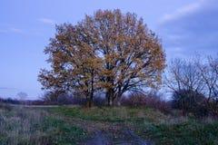 hösten låter vara treesyellow Royaltyfria Foton