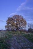 hösten låter vara treesyellow Arkivbilder