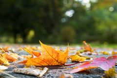 hösten låter vara trottoar Royaltyfria Bilder