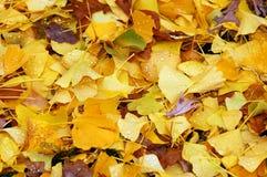 hösten låter vara vått Royaltyfri Fotografi