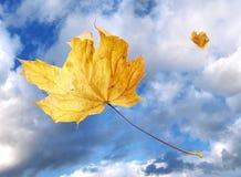 hösten låter vara windswept Arkivfoton