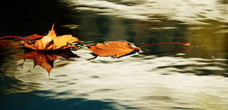 hösten låter vara yellow royaltyfri foto