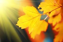 hösten låter vara yellow Arkivbilder