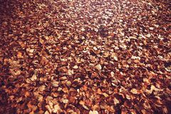 hösten låter vara yellow vissnade leaves arkivfoton