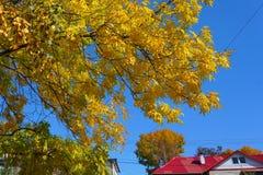 hösten låter vara yellow white för tak för bakgrundshus illustration isolerad röd royaltyfri fotografi