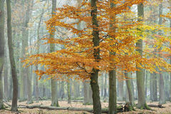 hösten landscapes wisentgehege Royaltyfri Foto