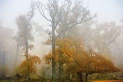 hösten landscapes wisentgehege Arkivbilder
