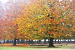hösten landscapes wisentgehege Arkivfoto