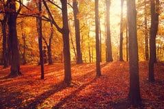 Hösten landskap Royaltyfri Foto