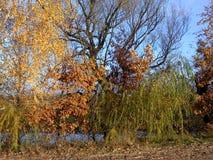 Hösten landskap Royaltyfria Bilder