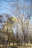 Hösten landskap arkivfoto