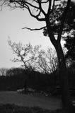 Hösten landskap royaltyfri fotografi